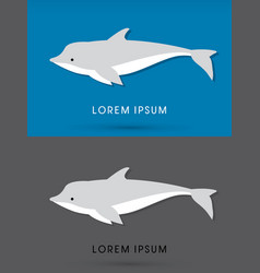 dolphin swimming vector image