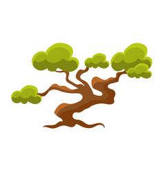 Green pine tree bonsai miniature traditional vector