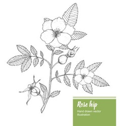 Rosehip plant vector