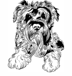 Sweet dog miniature schnauzer breed hand drawing vector