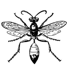 wasp sphex vector image