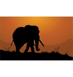 Elephant in the field of silhouette vector