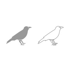 crow grey set icon vector image