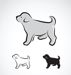 Dog labrador puppy vector