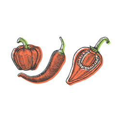 Hand drawn of peppers set sketch style doodle vector