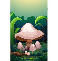 Mushrooms in the forest vector image vector image