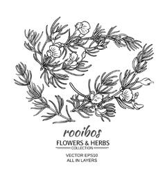 Rooibos set vector