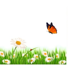 Nature summer daisy flowers with butterfly vector
