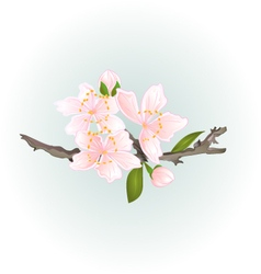 Sakura cherry twig pink flower with leaves vector