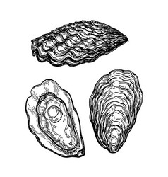 Oysters ink sketch vector