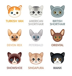 Cute cat icons set iii vector