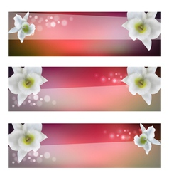 flower header with blossom orchid vector image