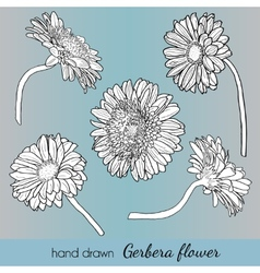 Set of hand drawn gerbera flowers Can use vector image