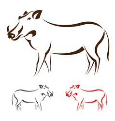 Boar vector image
