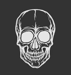 skull isolated on black background vector image vector image