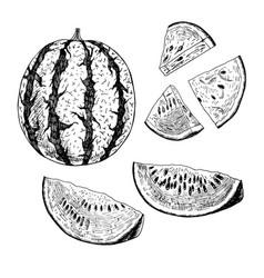 Hand drawn set of watermelon sketch vector