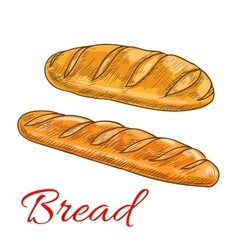 Bread wheat loaf and baguette sketch icons vector