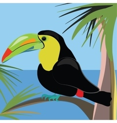 Beautiful toucan bird sitting on a palm tree vector