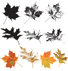 Set of grunge leaves vector