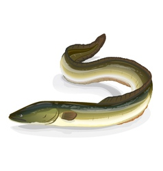 Eel fish vector image