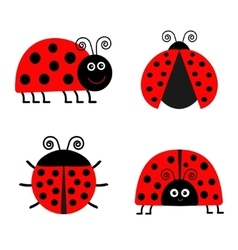 Ladybug Ladybird icon set Baby background Funny vector image vector image