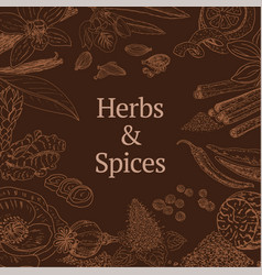 sketch herbs and spices concept vector image