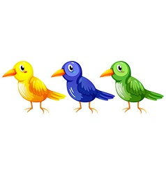 Three colourful birds vector
