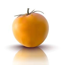 yellow tomato vector image
