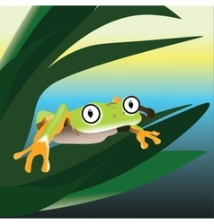Frog sitting on a leaf in the swamp vector