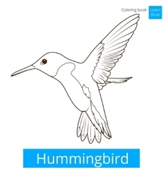 Hummingbird learn birds coloring book vector