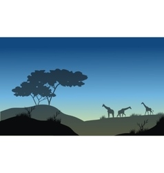 Silhouette of hills and giraffe vector
