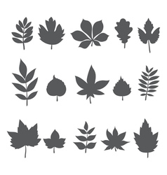 Silhouettes of tree leaves Autumn leaf collection vector image