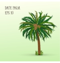 Date palm with fruits vector