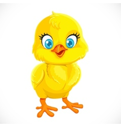 Cute yellow cartoon baby chicken vector