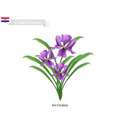 Iris croatica flowers the national flower of croa vector