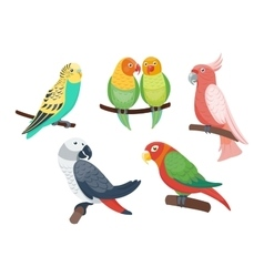 Cartoon parrots set vector image