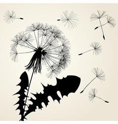 Blow dandelion silhouette vector