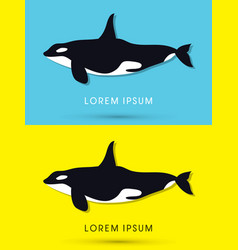 Killer whale swimming vector