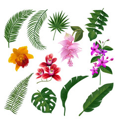 set of tropical flowers bouquet vector image