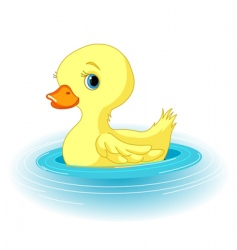 swimming duckling vector image vector image