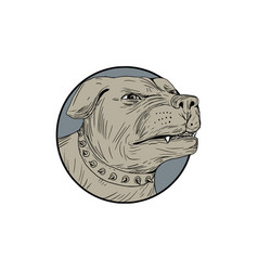 rottweiler guard dog head angry drawing vector image vector image