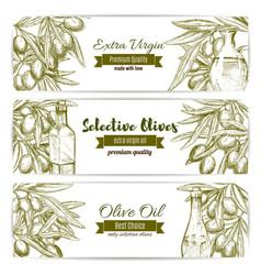 Olive oil sketch banner set with fruit and bottle vector