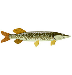 big green pike vector image