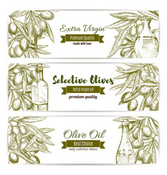 Olive oil sketch banner set with fruit and bottle vector
