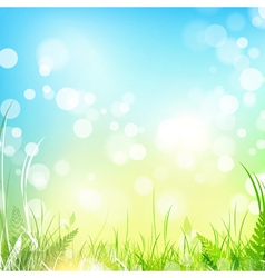 spring or summer meadow vector image