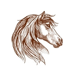 Wild brown horse head sketch vector