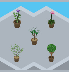 Isometric houseplant set of fern grower flower vector