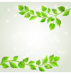 Branches with green leaves vector