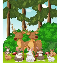 Deers and rabbits in the jungle vector