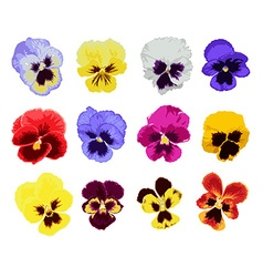 Hand drawn pansy set vector